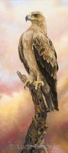 """Tawny Eagle"" by Lucie Bilodeau"